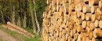 Vente publique de bois de chauffage